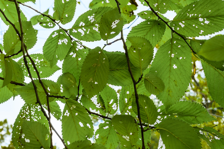 saturated: Bunch of green leaves and branches floral closeup photo in vivid and saturated green colors.