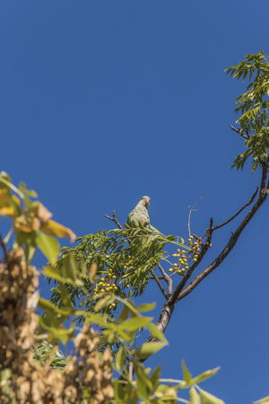 highs: Distant low angle view of little green parrot in the highs of a tree with clean blue sky .