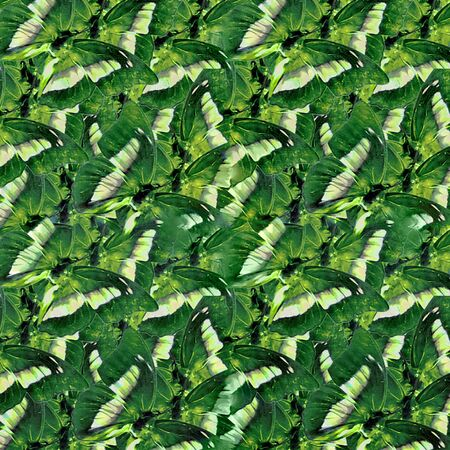 photo collage: Photo collage and manipulation digital technique butterflies pattern in vivid and saturated green colors.