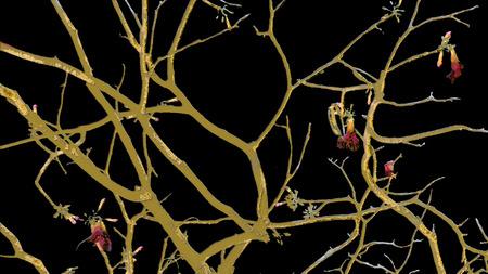 Collage photo numérique et la technique de manipulation nature de fond dans des tons chauds et noirs sombres. Banque d'images - 42540074