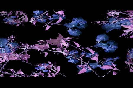 manipulation: Digital photo collage and manipulation technique beauty nature collage design in dark cold and black tones.