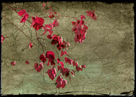 manipulation: Digital photo collage and manipulation technique beauty nature floral collage in magenta and browm tones against grunge textured background and black broken borders