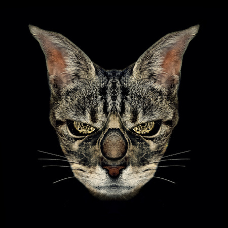 photo manipulation: Digital manipulation photo technique angry cat foreground steam punk portrait in black background Stock Photo