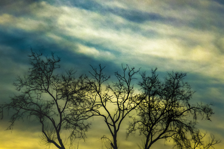 edited photo: Digital color edited photo low angle view landscape scene with tall trees and dramatic cloudy sky at background. Stock Photo
