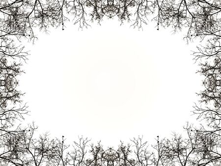 photo manipulation: Photo manipulation and collage digital technique nature background with black silhouette branches borders and white background