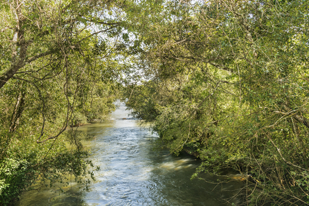 argentinian: Leafy flora and parana river landscape at argentinian border of Iguazu Park.