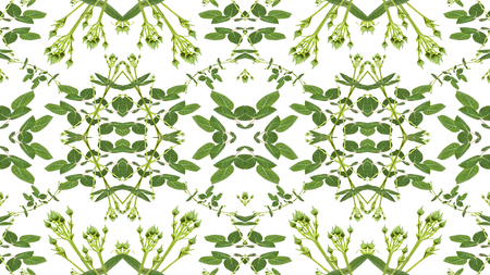 manipulated: Digital collage and manipulation technique geometric modern floral seamless pattern design in green and white colors.