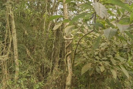 argentinian: Jungle landscape located at Iguazu park at argentinian border. Stock Photo