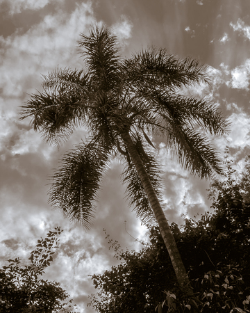 edited photo: Digital color edited photo of big trees and sky at Iguazu national park at the argentinian border.