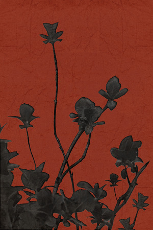 edited photo: Minimalistic style edited nature photo black plants isolated against red textured background. Stock Photo