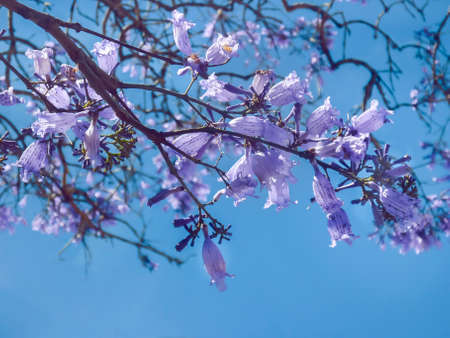 edited photo: Low angle view digital color edited photo of beautiful violet flowers against clean blue sky at background.