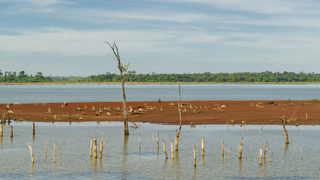 tress: Photo taken from bus from the trip to Itaipu dam in which we see small leaveless tress at the parana river in the brazilian border.