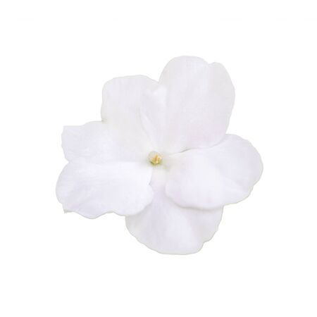pureness: Top view photo of beautiful white flower isolated in white background.