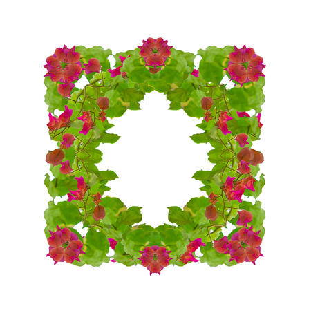 edited photo: Digital photo collage technique wreath decoration square frame created with green leaves and red santa rita flowers isolated in white background Editorial