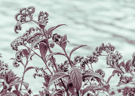 edited photo: Digital color edited floral scene photo of bunch of flowers and plants against water background in San Pablo Lake, Imbabura district Ecuador