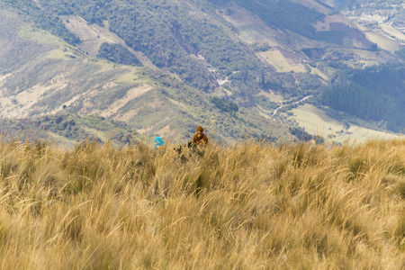 highs: Back view of two young adult women walking at meadow in the highs of Quito, Ecuador.
