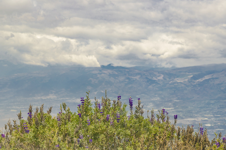 highs: Aerial view of flowers and plants and andes range mountains cover by cloudy sky in the highs of Quito, Ecuador
