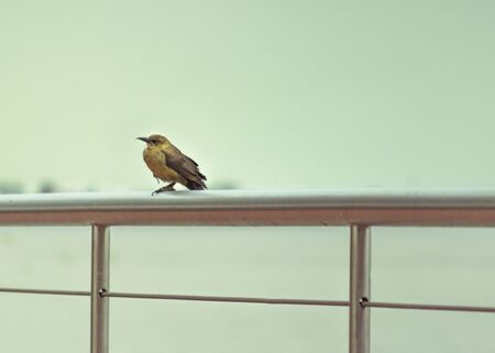 edited photo: Color edited photo of small cute bird sitting on thr top of railing with sky an sea at background