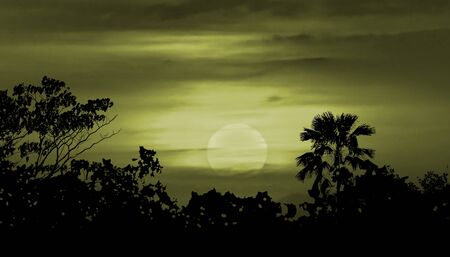 moonscape: Moonscape collage illustration scene with tropical vegetation and moon in blue cloudy background Stock Photo