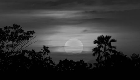 cresent: Moonscape collage illustration scene with tropical vegetation and moon in blue cloudy background Stock Photo
