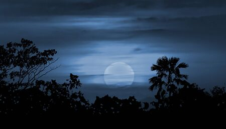 waxing: Moonscape collage illustration scene with tropical vegetation and moon in blue cloudy background Stock Photo