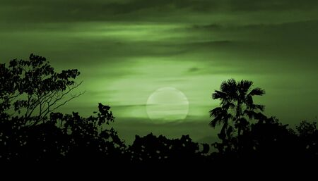 Moonscape collage illustration scene with tropical vegetation and moon in blue cloudy background Stock Photo