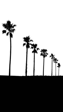 over white: Perspective silhouette palm trees illustration over white background