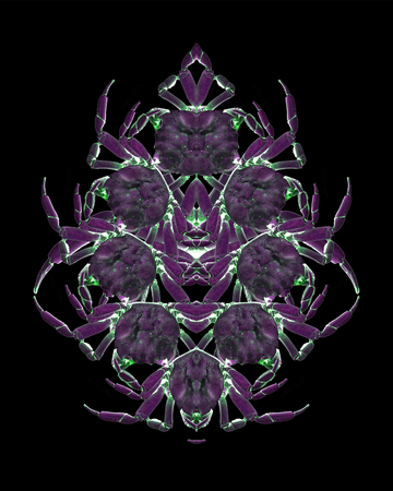 Digital photo collage technique crab motif ornate graphic object design in violet tones Stock Photo