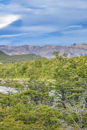 Patagonia landscape scene at forest in one of the trekking roads at El Chalten, Argentina