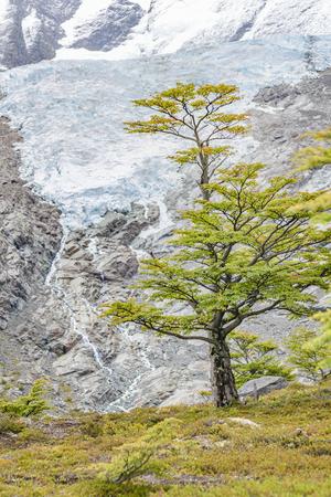 Patagonia landscape scene of Huemul Glacier located at Patagonia, Argentina
