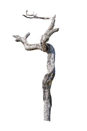 Dead leaveless tree photo isolated on white background Stock Photo
