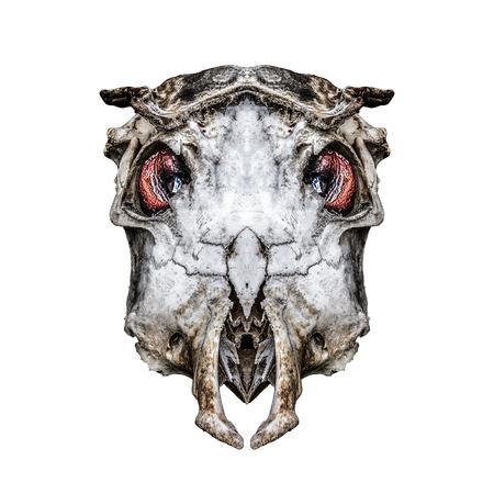 hellish: Digital art creepy alien headbone skeleton isolated Stock Photo