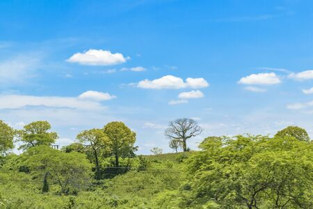 wheater: Landscape meadow tropical scene at outdoors in Guayas district, Ecuador Stock Photo