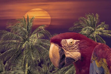 beach sunset: Tropical background collage design poster with parrot and sunset beach landscape at background Stock Photo