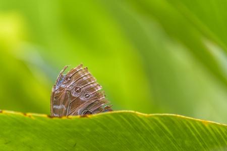 Close up shot of tropical butterfly at botanical garden of Guayaquil, Ecuador Stock Photo