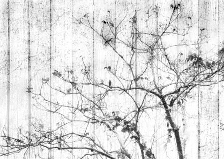 Grungy shabby chich style manipulated tree photo over textured background