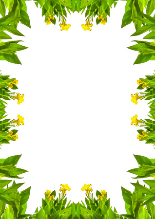 White frame background with nature decorated design borders.