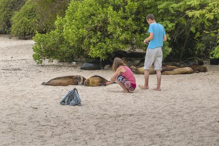 careless: GALAPAGOS, ECUADOR, AUGUST - 2016 - Careless young couple watching a group of sea lions sleeping at beach.