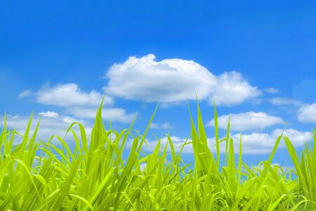 Landscape bright field scene background with grass and sky background Kho ảnh