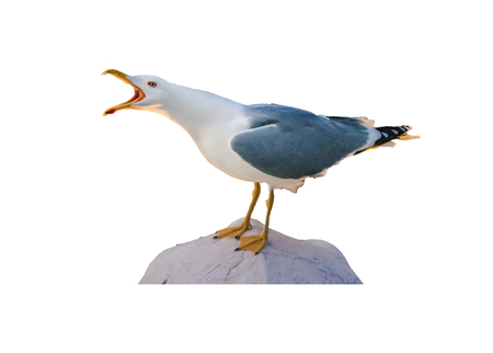 Isolated photo side view shot of seagull standing at stone Banque d'images