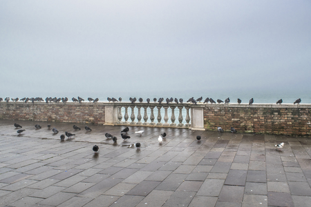 Group of doves at shore of lake in Venice city, Italy