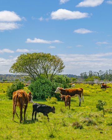Sunny day meadow scene at indigenous park in maldonado department, Uruguay Banco de Imagens