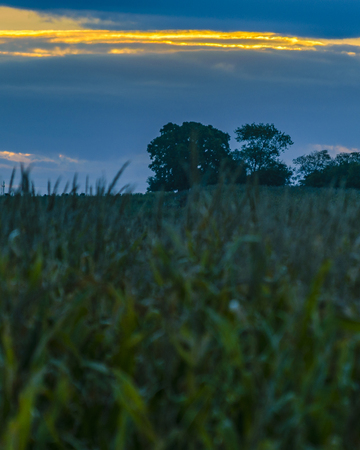 Sunset meadow landscape scene at san jose department, Uruguay