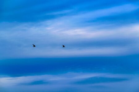 Two birds flying at blue sky background 免版税图像