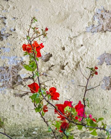 Poetic mood photo with red leaves over cracked damaged wall background