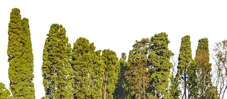 Isolated trees over white background panoramic photo Zdjęcie Seryjne