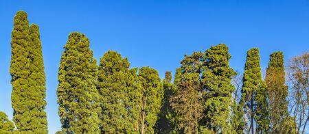 Trees over blue sky background panoramic photo Zdjęcie Seryjne