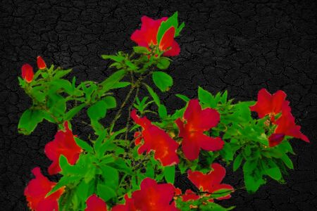 Digital pop art style illustration depicting red flowers and green plants over black background