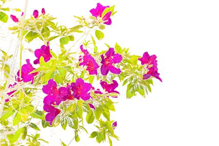 Stylized beautiful pink flowers and green plants illustration over white background