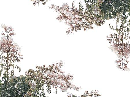 White background with campanula latifolia flowers borders photo
